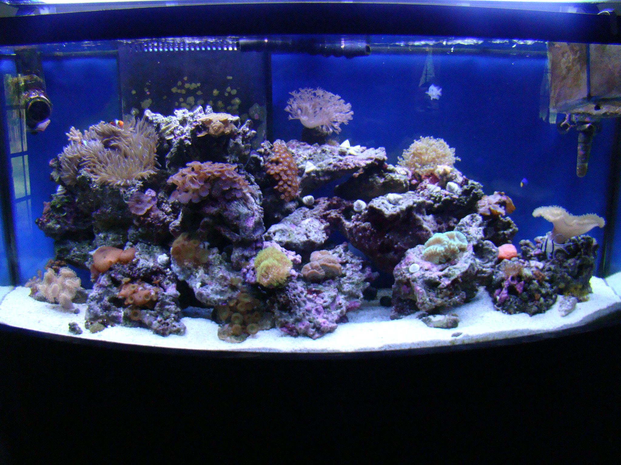 View full size image for 75 gallon fish tank dimensions